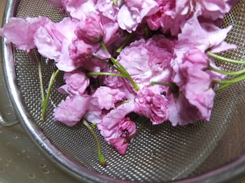 桜を洗って水気を切る