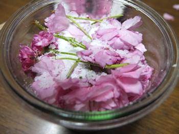 桜の花を塩で漬ける