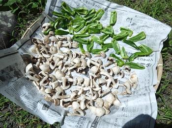 干し野菜を作る