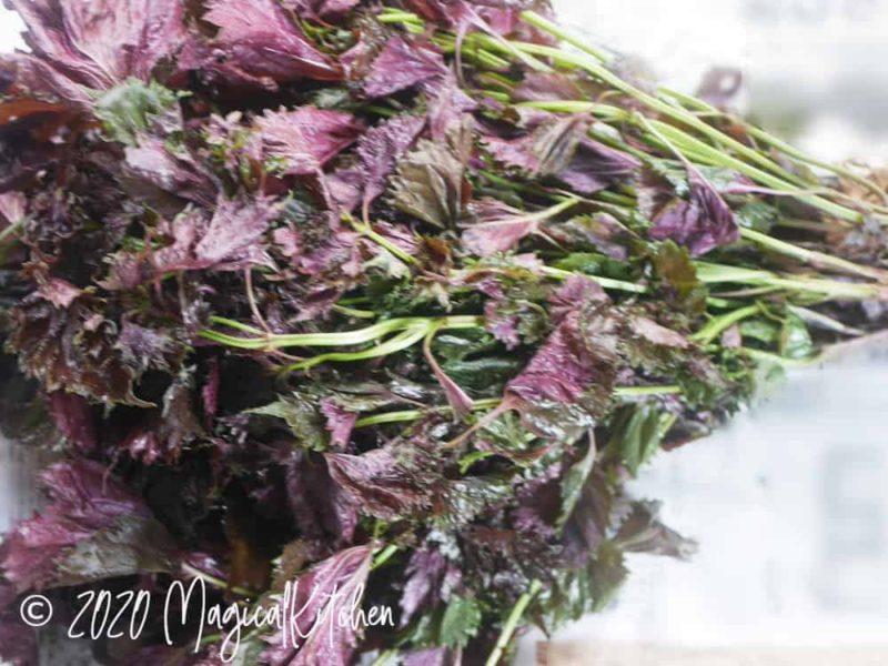 赤紫蘇の束